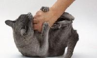 Причины агрессивности у кошки