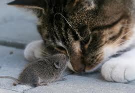 мышь и кошка