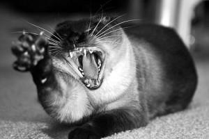 у кошки девять жизней
