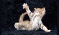 Занимательные рассказы о кошках