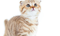Почему нельзя бить кошек. Воспитание.