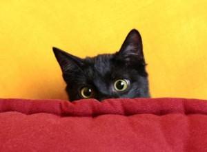 котенок боится
