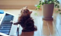 Кошка одна дома. Истории.