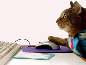 кошка за компьютером