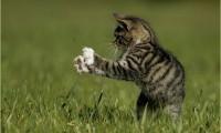 Кошка ловит мух:почему и что делать