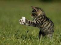 кошка ловит насекомых