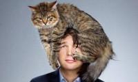 Как быть с кошкой, если к ней антипатия
