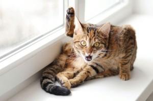 удивленная кошка на окне