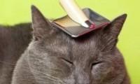 Уход за длинной шерстью кошки