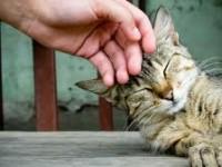 как гладить кошку