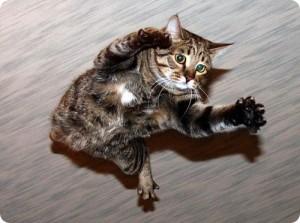 как падают кошки