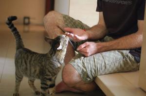 как узнать желает ли кошка ласки