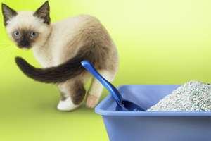 котенок возле лотка