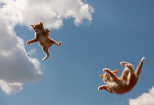 Кошка приземляется на лапы