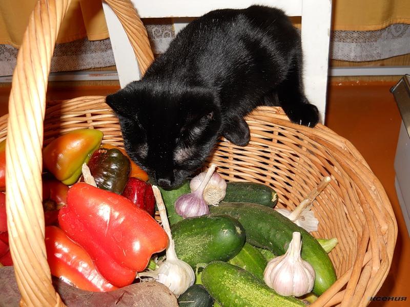 Фрукты и овощи для кота