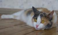 Кошка для одиноких и занятых