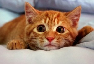 кошка наказана