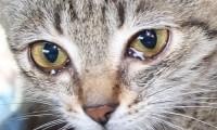 Причина слез у кошек
