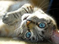 кошки боятся одиночества