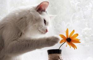 кошки не любят цветы