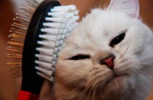 расчесать кошку