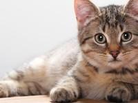 советы для любителей кошек