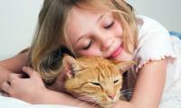 Ребенок требует котенка. Купить?