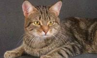 Характер кошки: как он влияет на ее жизнь