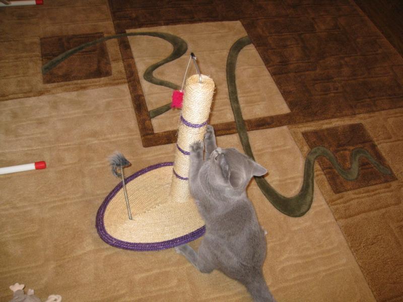 Как сделать когтеточку для котенка