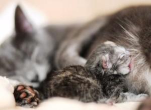 котенок после родов