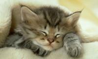 Воспитание котенка: о когтеточке,цветах и отдыхе