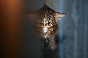 кошка за углом