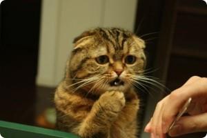 кот просит валерьянку
