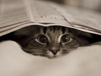 кошка прячется под газету