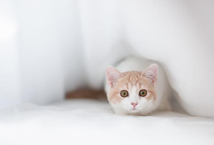 кошка шпионит