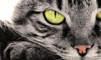 Обидеть кошку:насколько это опасно?