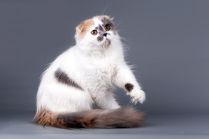 почему нельзя бить кошку