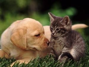 знакомство кошки и собаки