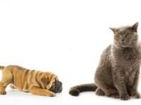 кошка игнорирует собаку