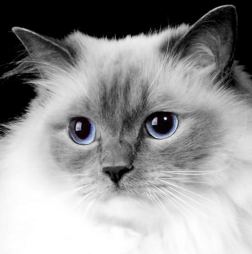 Кошки кошки в нижнем новгороде