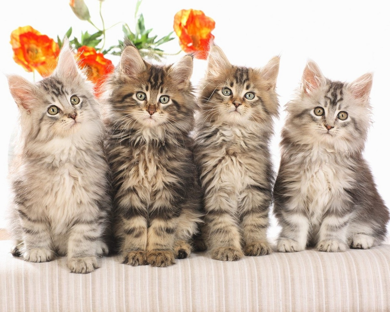 - Cute kittens hd images ...