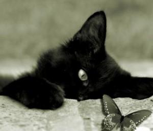 котик черный