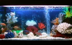 Покупаем оборудование для аквариума2