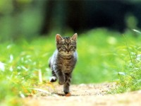 бродяжничество кошек
