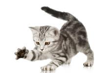 царапанье у кошек