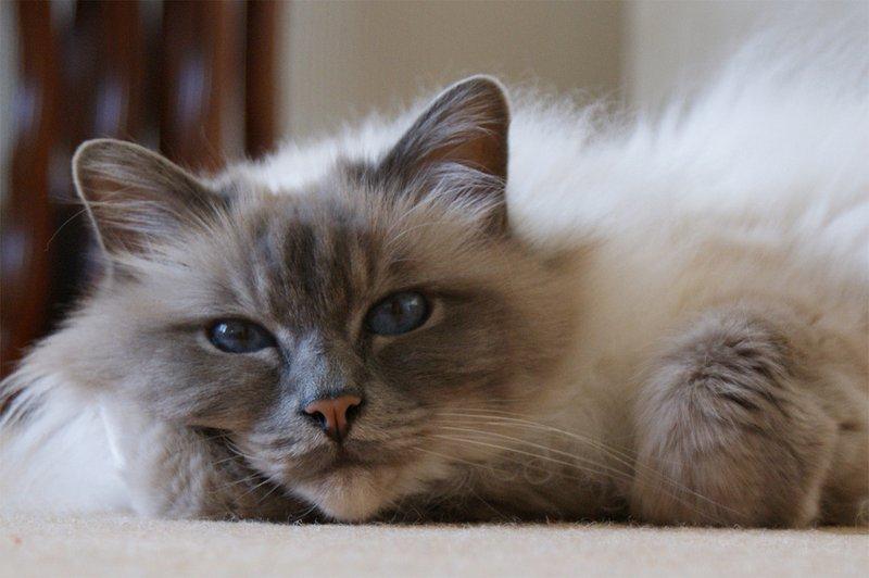Стерилизация кошек в барнауле цена - 482