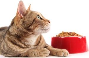 Особенности здорового питания для кошки