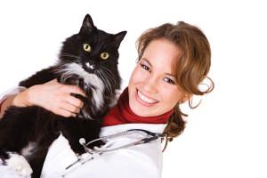 Особенности лечения геморроя у котов