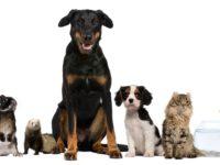 Альтернативные животные, которые идеально впишутся в вашу семью