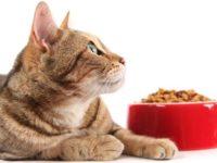 Какой корм для кошки самый лучший
